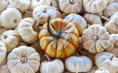 The 4 best pumpkin patches in Boise